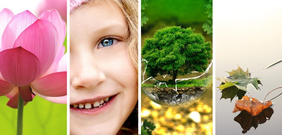 como cuidar medio ambiente, que es medio ambiente para niños, medio ambiente proyectos, medio ambiente preguntas, medio ambiente telefono, como ayudar al medio ambiente, medio ambiente problematica, medio ambiente frases